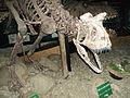 Dinosaurios. Museo Interpretación Histórica de El Calafate.JPG
