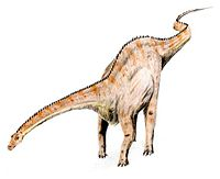 Modern depiction of Diplodocus with horizontal neck, flexible whip tail, keratinous spines and nostrils low on the snout.
