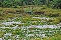 District-Keningau Sabah Swamp-at-Keningau-Sook-Road-01.jpg