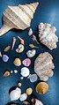 Diversity of Mollusca.jpg