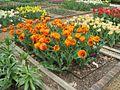 Dixon Gardens Memphis TN 2014-04-06 085.jpg
