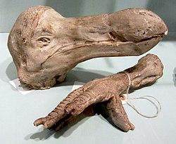 Varför är inte c-14 dating används i dating dinosaurie ben