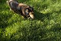 Dog-Leo 1.jpg