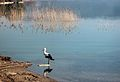 Dojran Lake 255.jpg