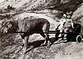 Down on the Farm (1920) - 8.jpg