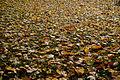 Downsview Dells Park - November 2nd, 2015 (22086923164).jpg