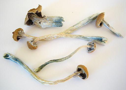 Dried Cubensis