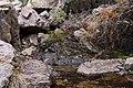 Dripping Springs - Flickr - aspidoscelis (2).jpg