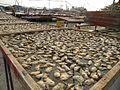 Dry oyster, Lau Fau Shan 2012.JPG