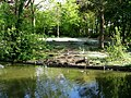 Duck pond - panoramio (1).jpg