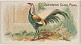 Duckwing Game Fowl, from the Prize and Game Chickens series (N20) for Allen & Ginter Cigarettes MET DP835064.jpg