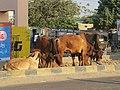Dwaraka and around - during Dwaraka DWARASPDB 2015 (195).jpg
