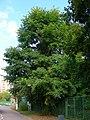 Dzerzhinsky, Moscow Oblast, Russia - panoramio (5).jpg