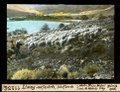 ETH-BIB-Limay, aufwärts, Schafherde-Dia 247-11256.tif
