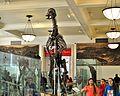 Edmontosaurus AMNH 200.jpg
