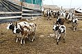 Eitam-Farm-MVIF-315.jpg