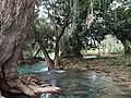 El Trampolín (río Agua Buena) - Tamasopo, San Luis Potosí.jpg