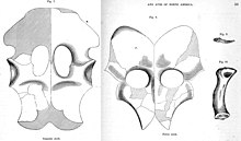 Illustrations of plated bones with holes