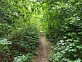 Epping Forest 20170727 111938 (49374949462).jpg