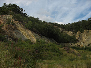 Shropshire Wildlife Trust - A former quarry at The Ercall