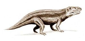 Anisian - Erythrosuchus
