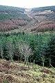 Eskdale forestry - geograph.org.uk - 1128150.jpg