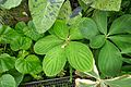 Espèces tropicales-Jardin des plantes de Nantes (1).jpg