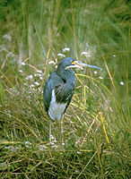 Everglades National Park EVER1495.jpg