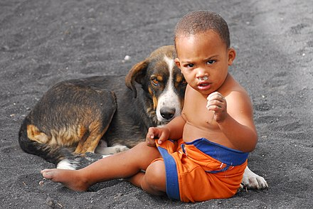 hunde vaihingen enz