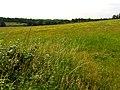 Fallow Farmland near Upper Bucklebury - geograph.org.uk - 20111.jpg