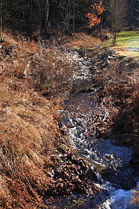 Fallow Hollow looking upstream.JPG