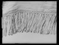 Fana för frimurarorden med lila Karl XIIIs namnchiffer - Livrustkammaren - 27868.tif