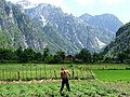 Farmer in Field - Theth Village - Northern Albania (41838452595).jpg