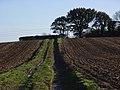 Farmland, Crondall - geograph.org.uk - 282149.jpg