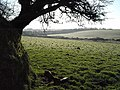 Farmland and shelter belt - geograph.org.uk - 731048.jpg