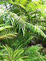 Ferns greenhouse 01.JPG