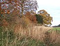 Field edge and trees in late autumn, Higham - geograph.org.uk - 623106.jpg
