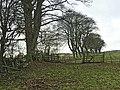 Field near Humshaugh in winter - geograph.org.uk - 1083032.jpg