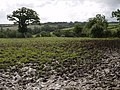 Field near Lower West Kimber - geograph.org.uk - 486923.jpg