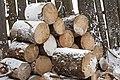 Firewood in Russia. img 10.jpg