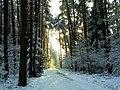 First snow - Flickr - Stiller Beobachter.jpg