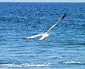 Fishing For Dinner Loch Arbour NJ.jpg