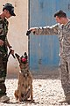 Flickr - The U.S. Army - Anbar Police stand up K-9 unit.jpg