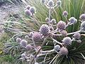 Flor no Parque Nacional do Itatiaia.jpg
