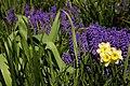 Flore de Bercy 3.jpg