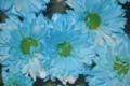 Flores que também irão compor os Barquinhos de Iemanjá.png