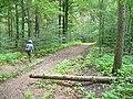Flottstelle - Waldweg (Woodland Path) - geo.hlipp.de - 39293.jpg
