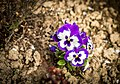 Flower (149776047).jpeg