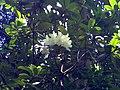 Flower - panoramio (7).jpg
