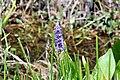 Flowers 3 (6908524182).jpg